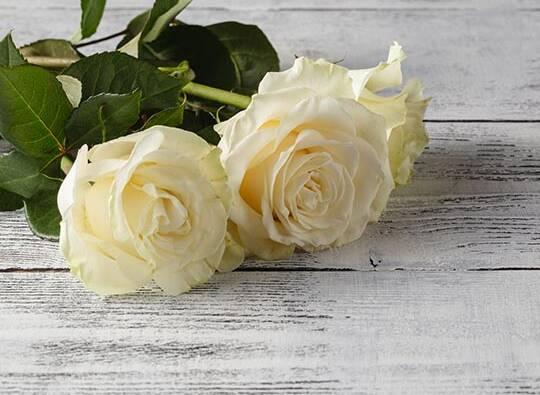 rose-left.jpg