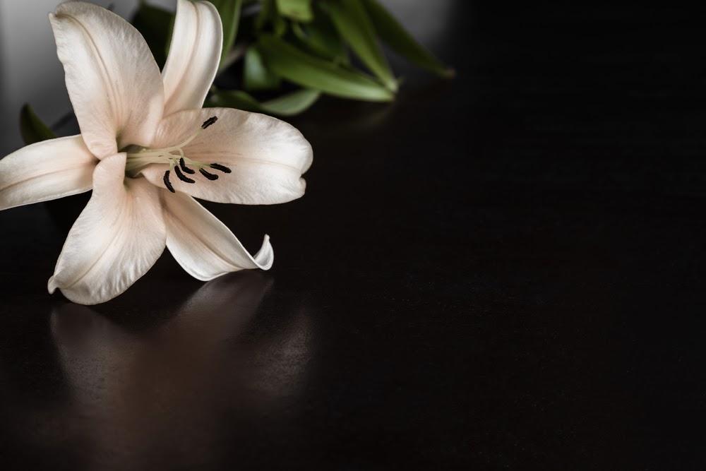 Lily flower on the dark background.